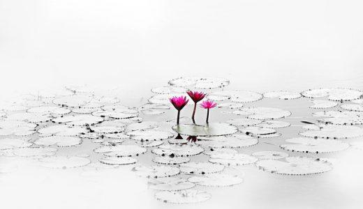 禅タロットとは・・人生のマスターになるまでが記されたカード